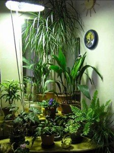 зимовий сад у квартирі