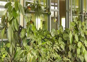 екзотичні рослини в зимовому саду